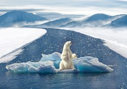 Representation of how polar bears are affected by climate change Image by: Pixabay