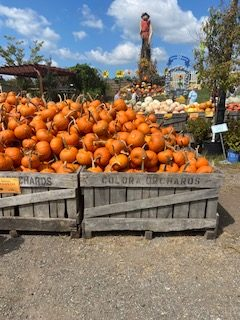 Students at Cabrini University 'fall' in love with autumn wonderland